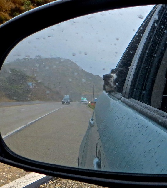 walter in the rear view