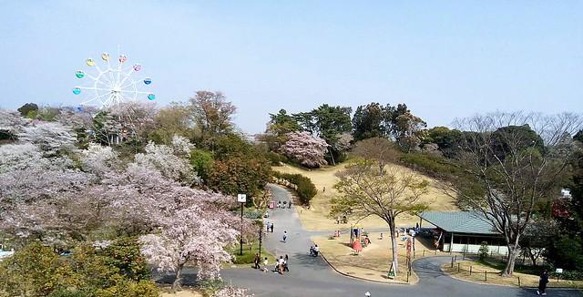 濱松花卉主題公園 (13)