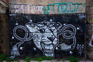 IMGP9447 The tiger