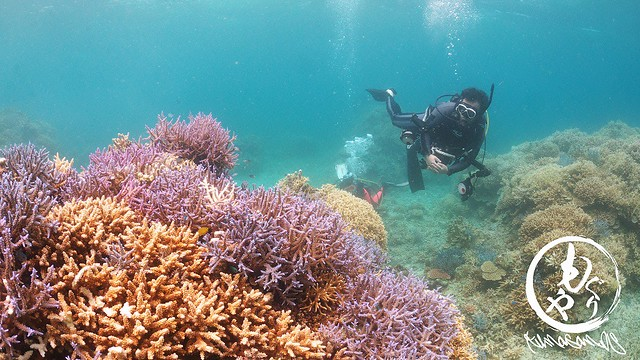 いぐさん、カメラ放置でサンゴに癒やされてました♪