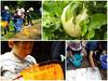 Photo:【モリアオガエルあらわる!!】 By 自然再生と自然保護区のための基金