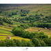 Swaledale by shaun.argent