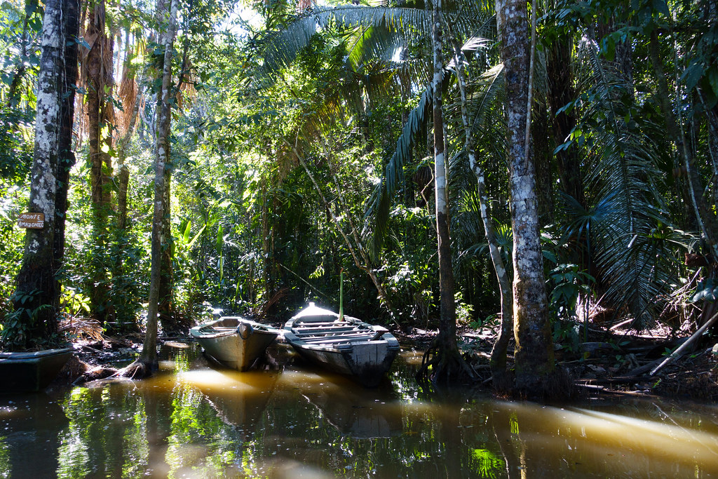 Rainforest-04952-2