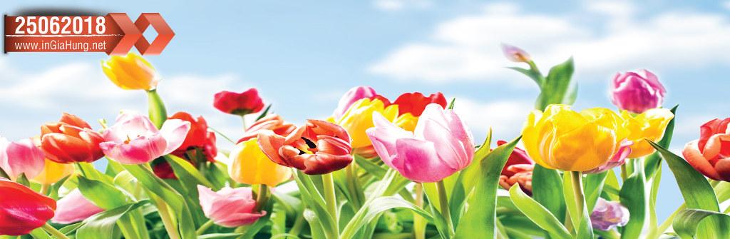 Mẫu kính óp bếp in những bông hoa tulip 25062018@KinhOpBep0418