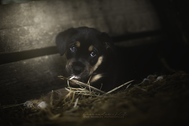 Âmes Animales Photographies - Page 2 43003666191_69a65c1272_z
