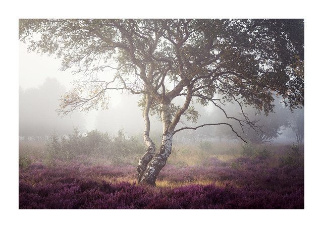 Westleton Heath 27 August 2017