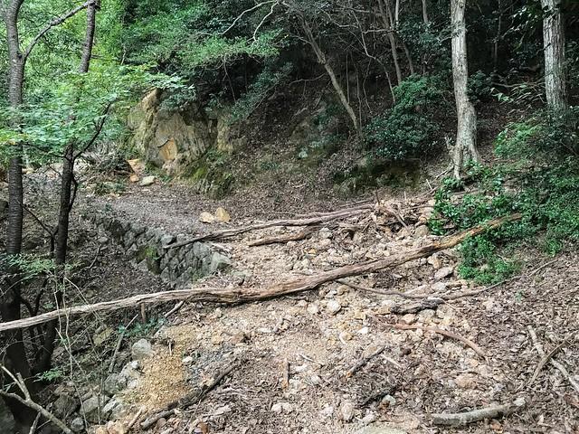 仙ヶ岳 林道 倒木