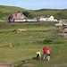 Watch the Birdie.... 156 490 at Sea Mills beach, St.Bees. Cumbria.