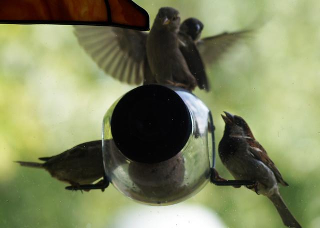 birdfeederC03814