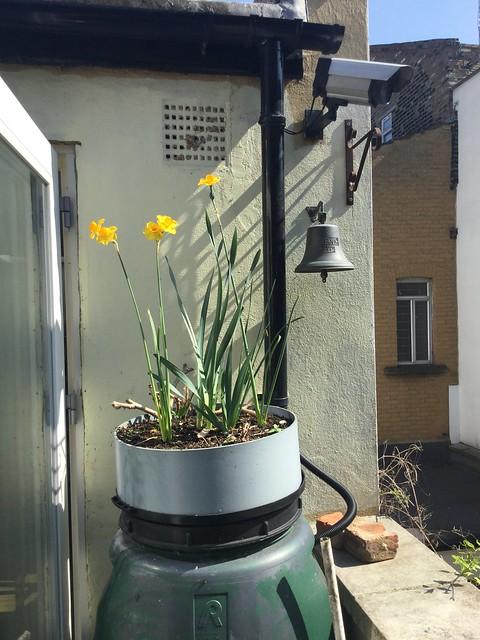 My Garden 18/04/20 (02)