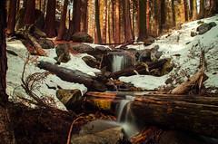 Sequoia Waterfall
