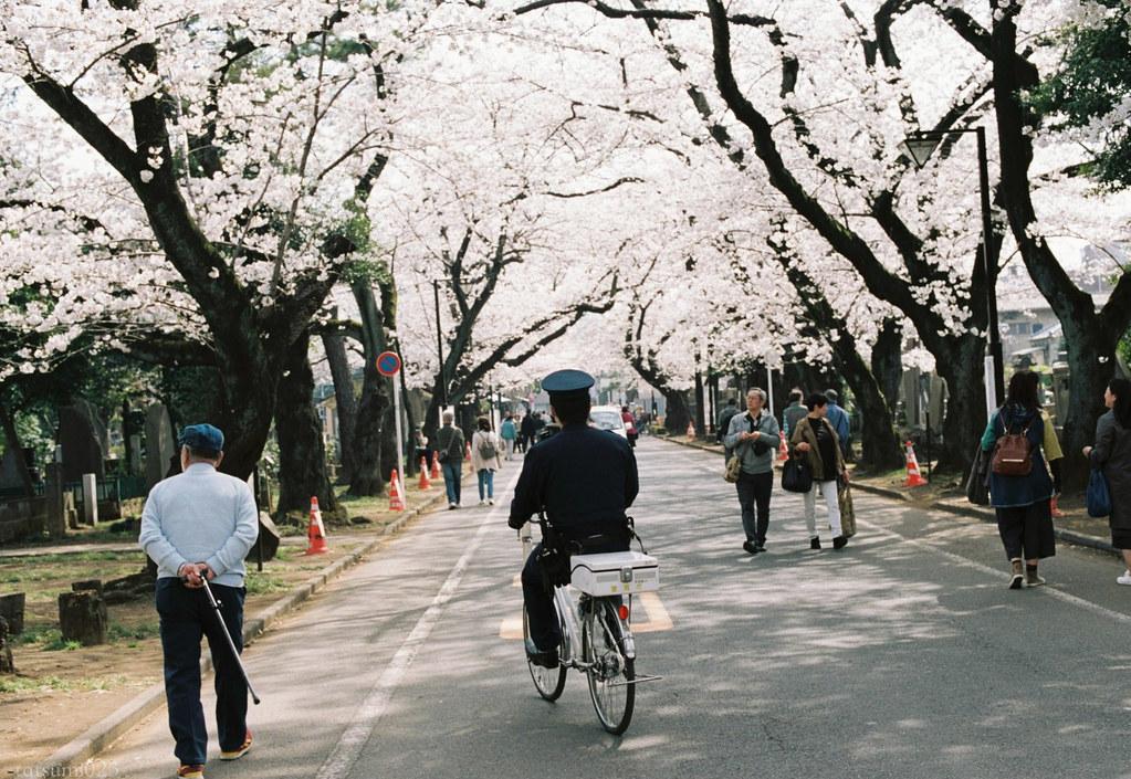 2018-03-30 谷中の桜 003