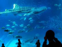 沖縄美ら海水族館, Okinawa aquarium, japan