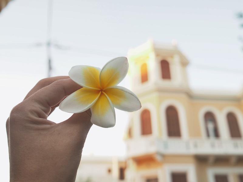 rhodes flower