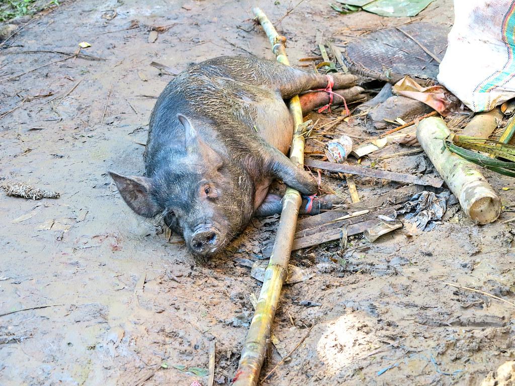 Entierro en Sulawesi