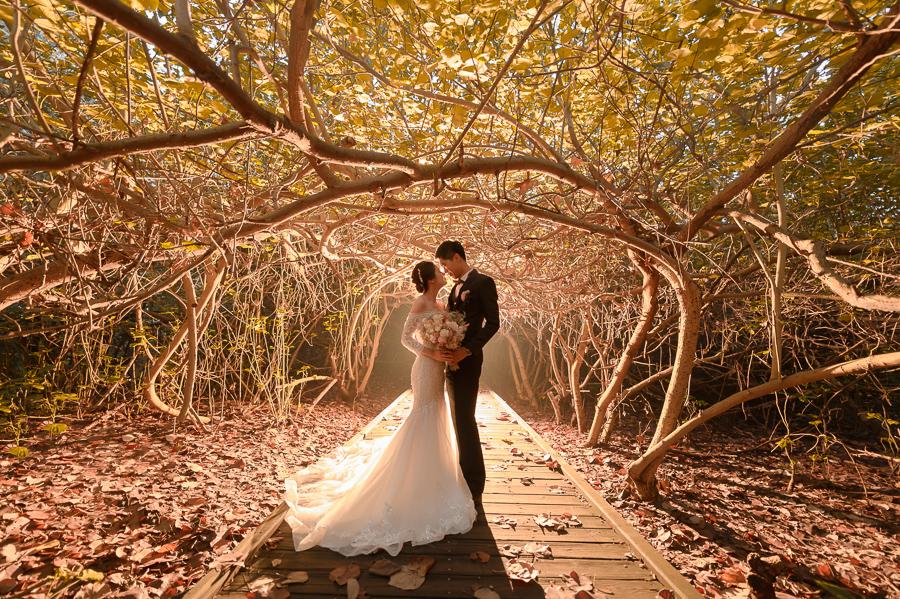 41135670390 760dbfbd8c o 台南婚紗景點推薦 森林系仙女的外拍景點