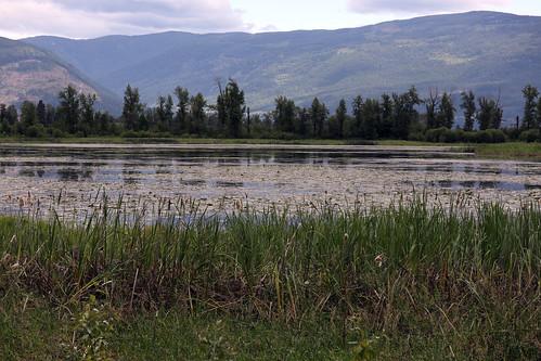 marsh crestonvalleywildlifemanagementarea ramsarconvention