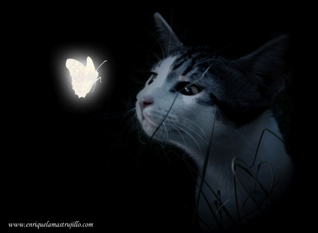 dixi-mariposa-iv-noche-negra-flickr