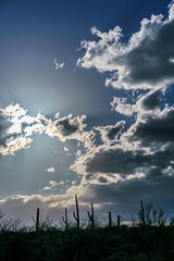 1803 Saguaro and Clouds