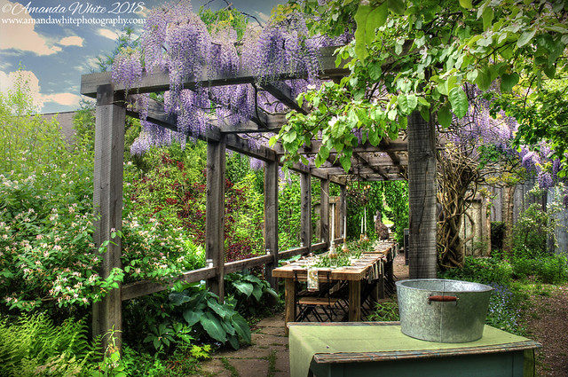 Dining Under the Wisteria