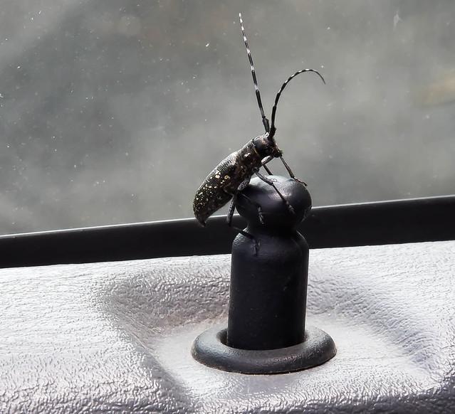 Bug on Board