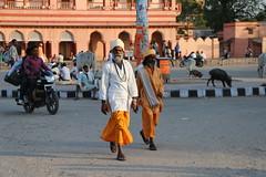 Indien 2015 - 12.Tag, Jaipur - Ranthambore