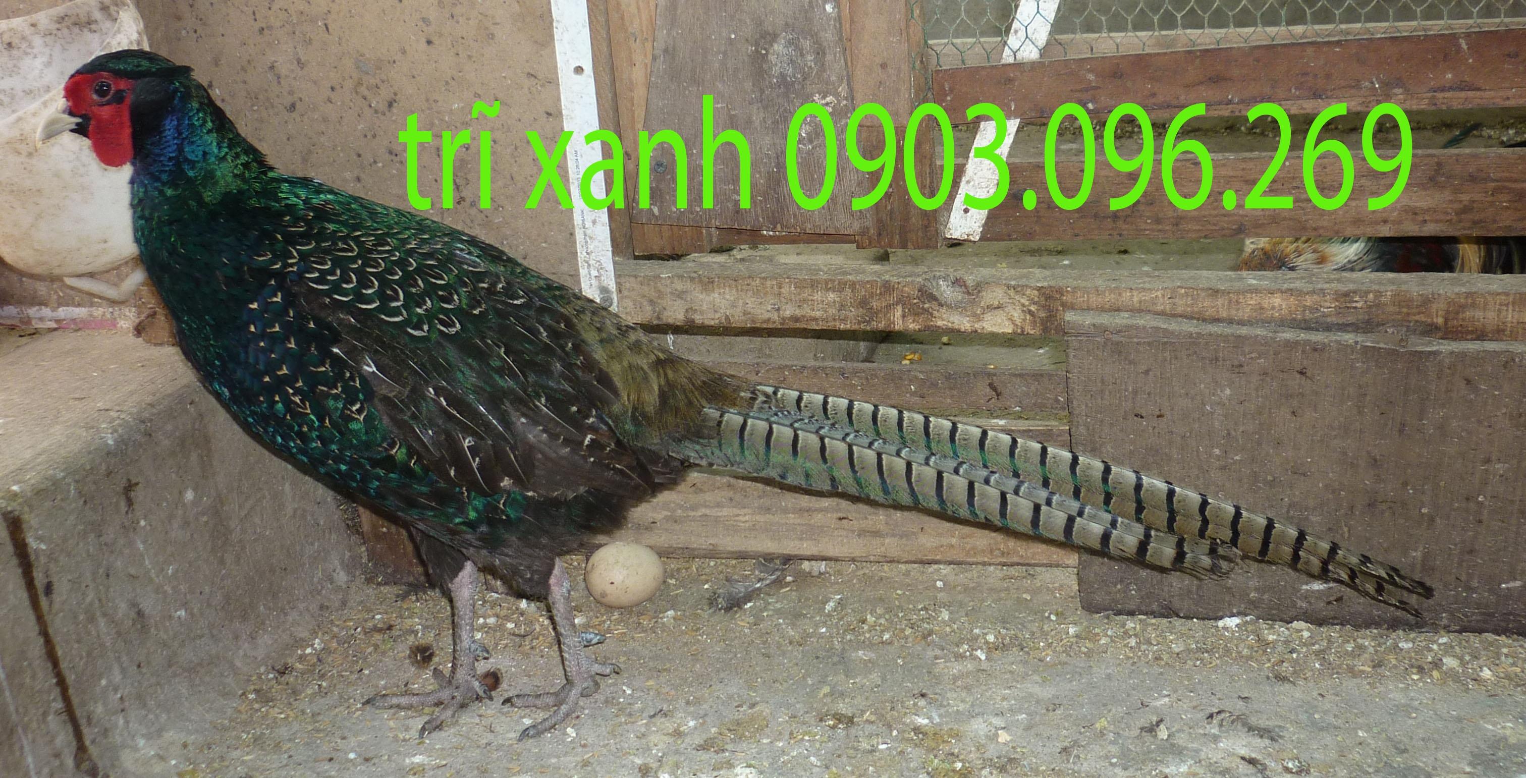 26469463037_ef01fd9614_o.jpg