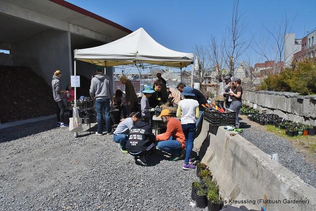 Gowanus Canal Conservancy Native Plant Sale at the Salt Lot, April 2018