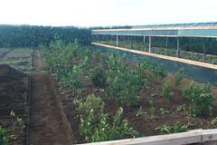 Viveiros de plantas nativas dos Açores