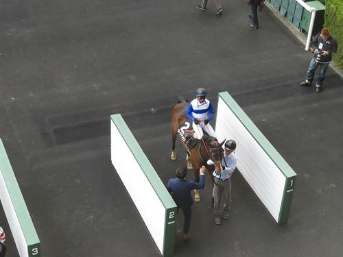 福島競馬場の枠場を3階から眺める