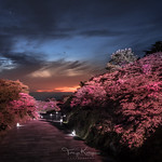 19. Mai 2018 - 19:54 - Mt. Unzen is famous for beautiful azaleas in the spring, and the azaleas are illuminated vividly during the special tour 'Premium Night in Nita pass, Unzen' held a few times a year.