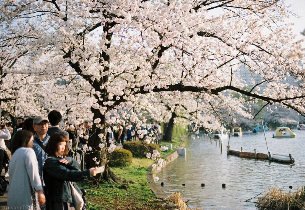 2018-03-30 上野公園桜色 001