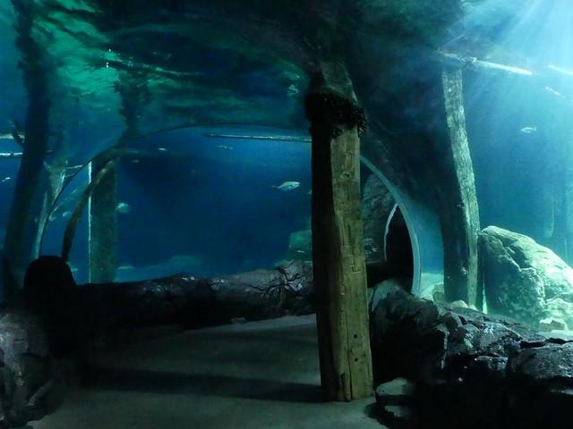 Aquarium, Burgers Zoo