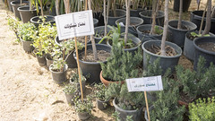 Mints at Egypt's Spring Flowers Fair 2018