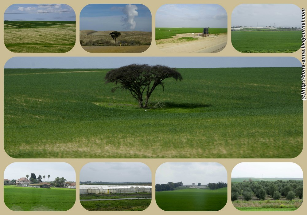 Negev-collage-a