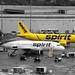 Spirit Yellow FLL JTPI 7183