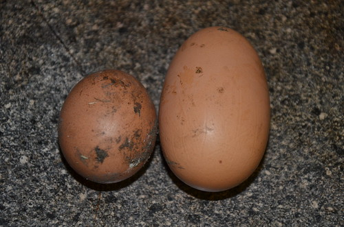 eggs little and large Mar 18