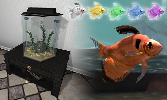 JIAN Longfin Tetra Aquarium & Swimmers ( Uber 5/25 )