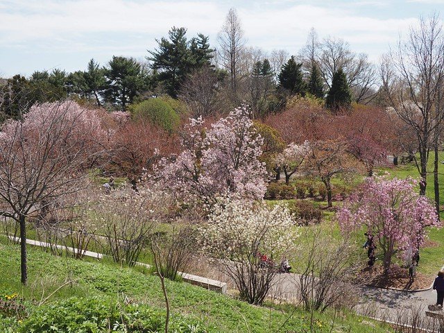 木, 2018-04-26 13:49 - Brooklyn Botanic Garden