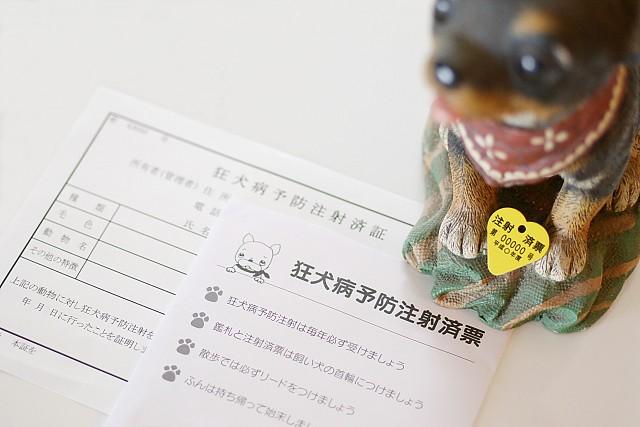 子犬に必要な狂犬病予防ワクチンの注射済み票