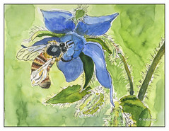 Bee & Borage 4