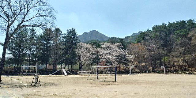 화북초등학교 봄날풍경