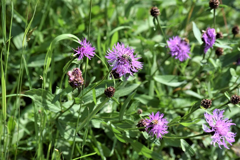 Wild Flowers 31.05 (1)