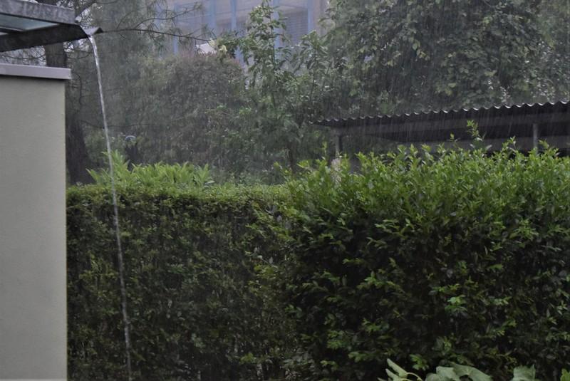 Rain 31.05 (7)