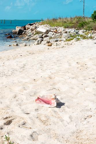 animal bahamas beach builtenvironment camera coast conch eleuthera featureslandmarks lamppost nikon28300mmf3556 nikond800 rocks sea shell shellfish sky streetlamp streetlight topography southeleuthera thebahamas