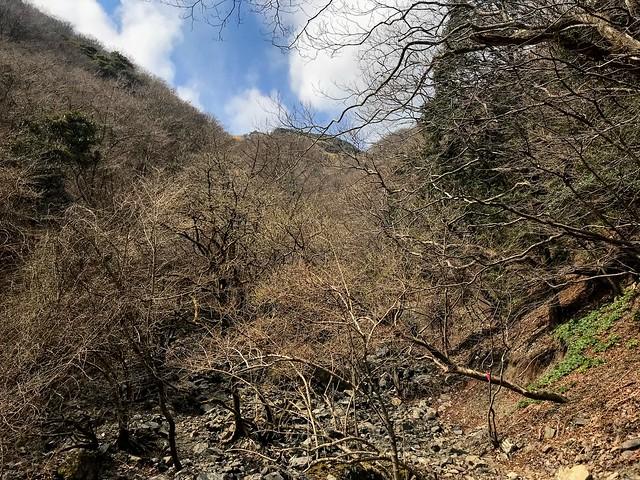 入道ヶ岳 井戸谷 登山道 笹原確認