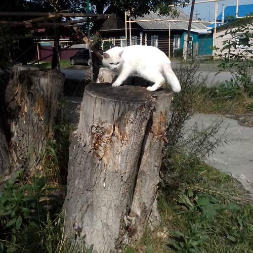 white_cat_vs_black_dog
