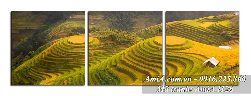 AmiA 1126 - Tranh bộ 3 tấm treo phòng khách nắng vàng lấp lánh