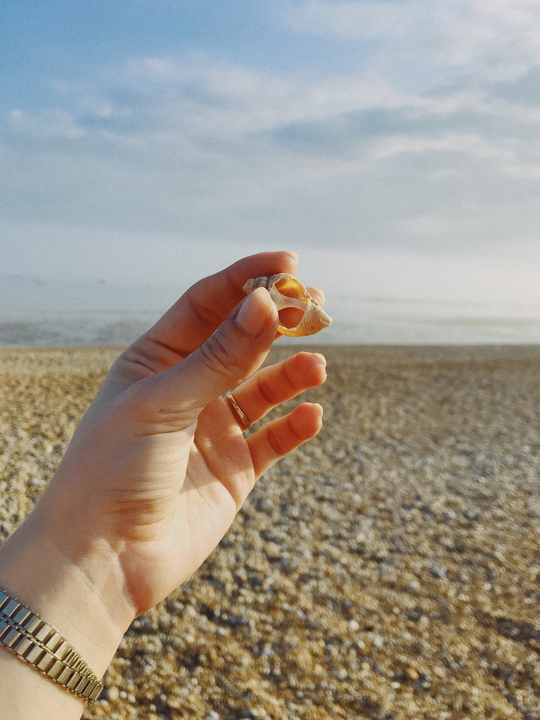 hand holding seashell on beach