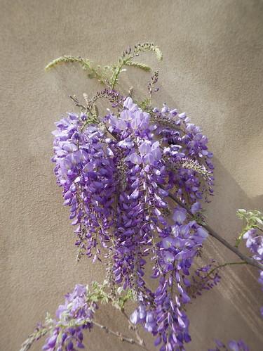explosion florale - Page 3 40917365884_86fbf0856e